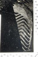 footwear impression (8)
